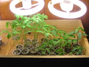 گیاه جوان